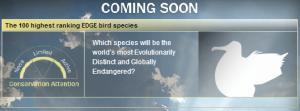 EDGE BIRDS